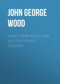 Hardy Perennials and Old Fashioned Flowers - John George Wood